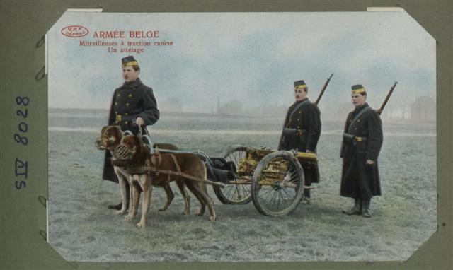 belgian-army-machine-guns-pulled-by-dogs (Small).jpg