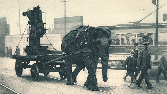 elephant-transporting-equip-wwi2.jpg
